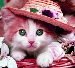 Best Very Cute Whatsapp DP Images photo pics free