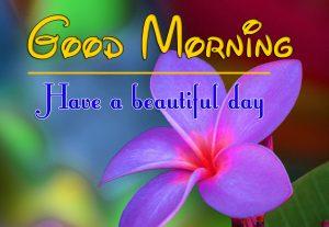 Flower Good Morning Images