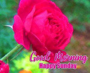 Good Morning Happy Sunday HD Pics Wallpaper Download