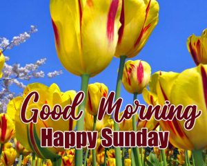 Good Morning Happy Sunday HD Pics Wallpaper Download Free