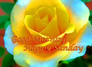 Good Morning Happy Sunday HD Pics Pictures Download