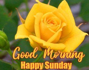 Good Morning Happy Sunday HD Pics Images Free