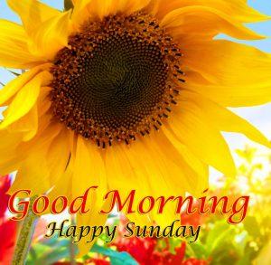 Good Morning Happy Sunday HD Wallpaper Pics Download