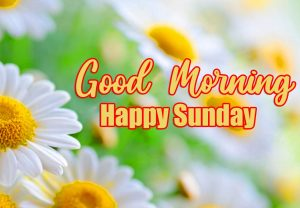 Good Morning Happy Sunday HD Images HD Download