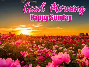 Good Morning Happy Sunday HD Pictures Free Download