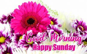Beautiful Good Morning Happy Sunday HD Pics Free