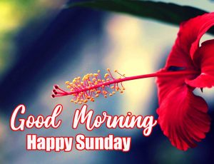 Beautiful Good Morning Happy Sunday HD Wallpaper Free