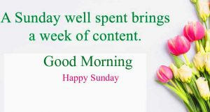 New Top Free Good Morning Happy Sunday HD Pics Images Download