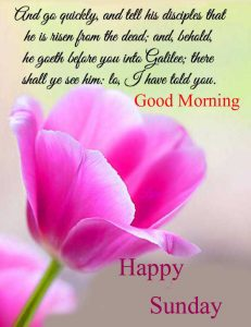 Beautiful Good Morning Happy Sunday HD Pics Free Download