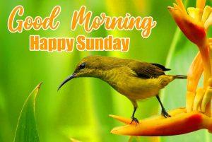 Beautiful Good Morning Happy Sunday HD Pics Free Latest
