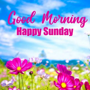 With Flower Beautiful Good Morning Happy Sunday HD Pics HD
