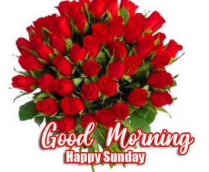 Red Rose Beautiful Good Morning Happy Sunday HD Pics Download