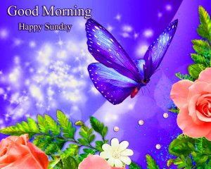 Beautiful Good Morning Happy Sunday HD Pics Wallpaper New