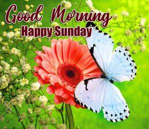 Beautiful Good Morning Happy Sunday HD Pics Download