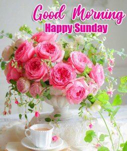 Rose Free Beautiful Good Morning Happy Sunday HD Pics IMAGES