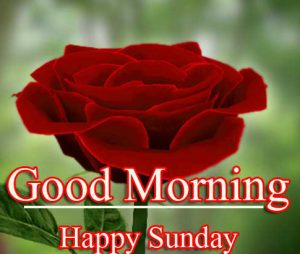 Red Rose Beautiful Good Morning Happy Sunday HD Images With Girlfriend