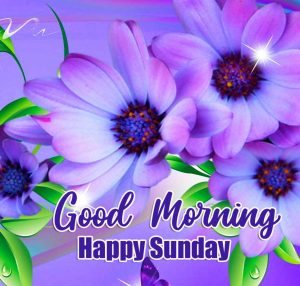 Free Latest New Beautiful Good Morning Happy Sunday HD Images