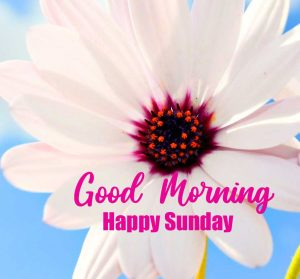 Beautiful Good Morning Happy Sunday HD Pictures Free