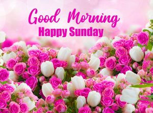 Free Top Latest Beautiful Good Morning Happy Sunday HD Pics Images