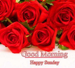 Rose Free Beautiful Good Morning Happy Sunday HD Pics Download
