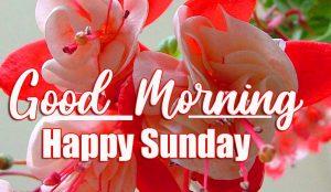 Latest Top Beautiful Good Morning Happy Sunday HD Pics Wallpaper Download