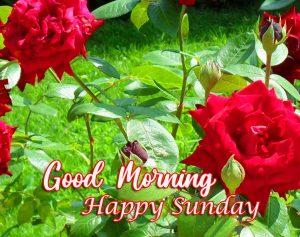 Beautiful Latest Good Morning Happy Sunday HD Wallpaper Images