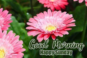 Beautiful Latest Good Morning Happy Sunday HD Free Download