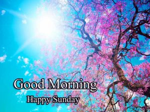 Good Morning Happy Sunday HD Images Free Latest Download
