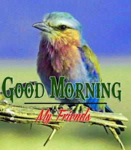 Best Good Morning Images Pics Wallpaper With Animal Lover