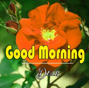 Best Good Morning Images Wallpaper Pics With Flower