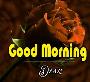 Best Good Morning Images Pics Wallpaper With Rose
