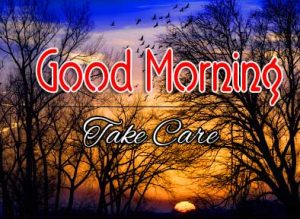 Best Good Morning Images Pics Pictures Free Download