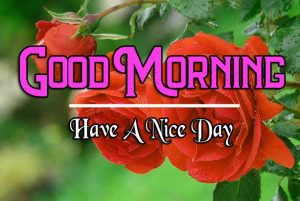 Best Good Morning Images Pics Wallpaper for Whatsapp / Facebook