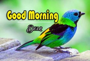 Best Good Morning Images Wallpaper pics Free Download