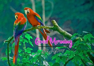 Best Good Morning Images Wallpaper Pics With Animal Lover