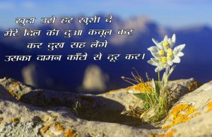 Free Beautiful Hindi Shayari Pics Download