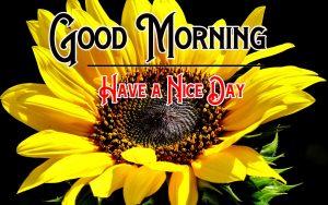 p Good Morning Images Pics Download Free