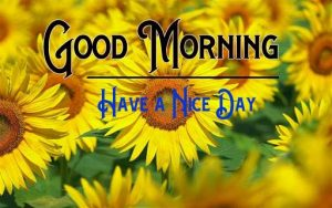 p Good Morning Images Wallpaper New