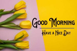 p Good Morning Images With Yellow Rose