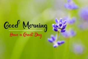 Beautifu Good Morning Images pics hd download