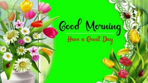 Beautifu Good Morning Images pictures download