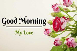 Beautiful Flower Good Morning Images pics free hd