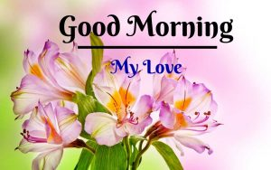 Beautiful Flower Good Morning Images pictures for download