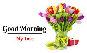Beautiful Flower Good Morning Images wallpaper hd download