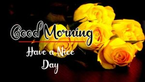 Beautiful Flower New Best Good Morning Images photo download