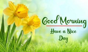 Beautiful Flower New Best Good Morning Images photo pics download