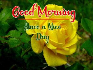 Beautiful Flower New Best Good Morning Images pics download