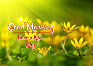 Beautiful Flower New Best Good Morning Images pictures free download