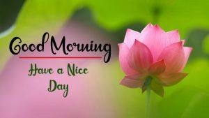 Beautiful Flower New Best Good Morning Images wallpaper hd