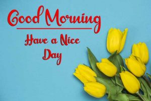 Beautiful Flower New Best Good Morning Images wallpaper pics hd